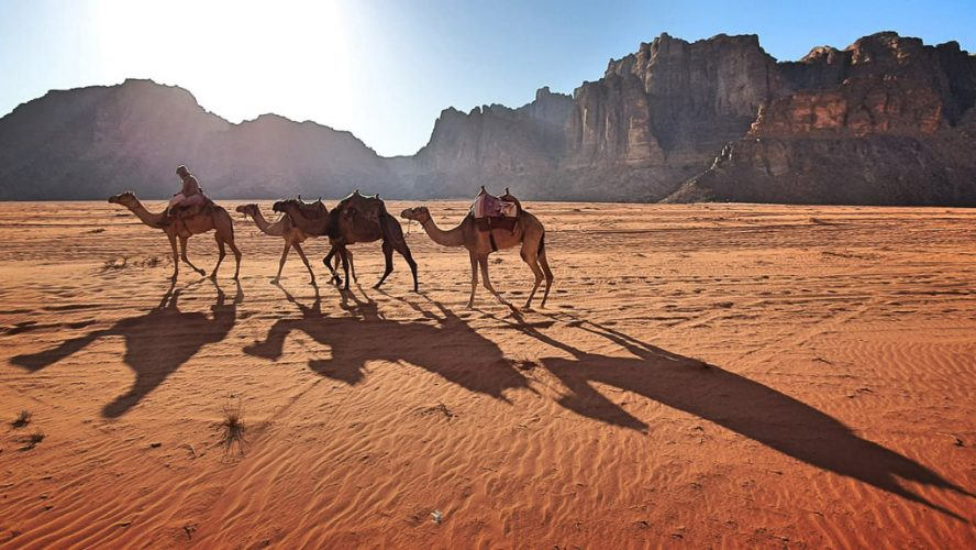 Camels travelling through valley  in Wadi Rum, Jordan