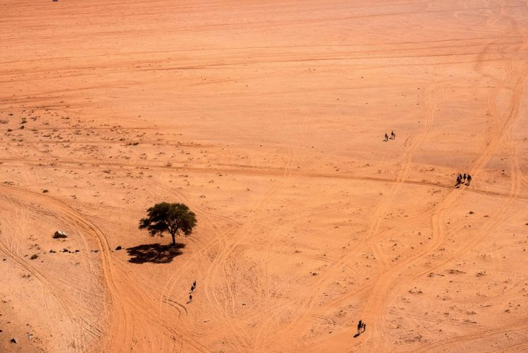 camels map desert trails in wadi rum